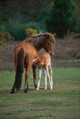 Nursing Mare and Foal 
